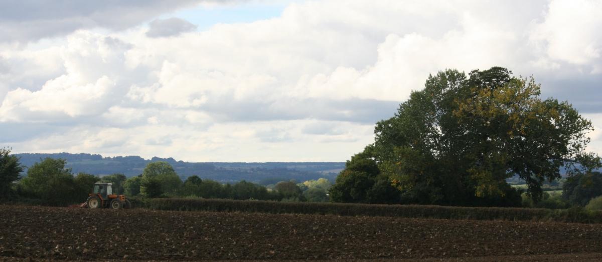 hedge cutting shipston